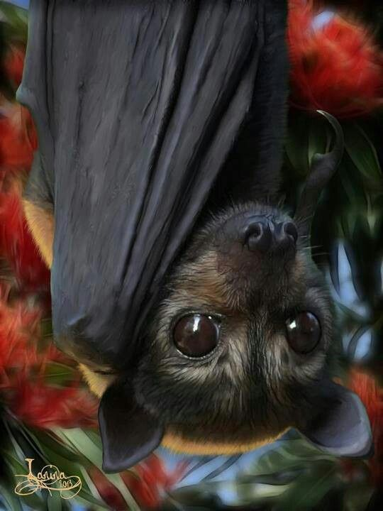 lianas and flying fox symbiotic relationship