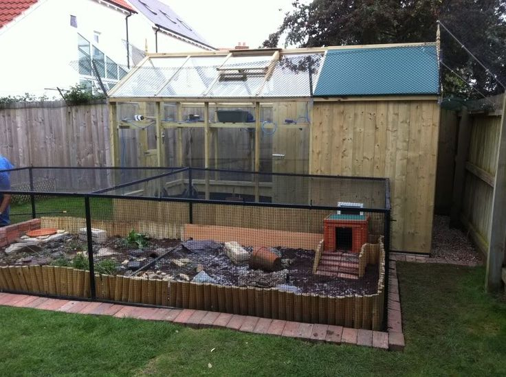Tortoise Outdoor Enclosure Information - Page 16 - Reptile Forums … | Pinteres…