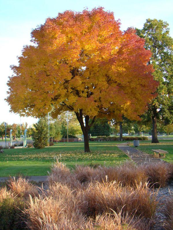 Julia Davis Park, Boise Idaho
