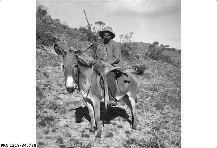 Ernie Demell of Nepabunna Mission Station, Northern Flinders Ranges, South Australia. He is riding a donkey, and carries a rifle and freshly...