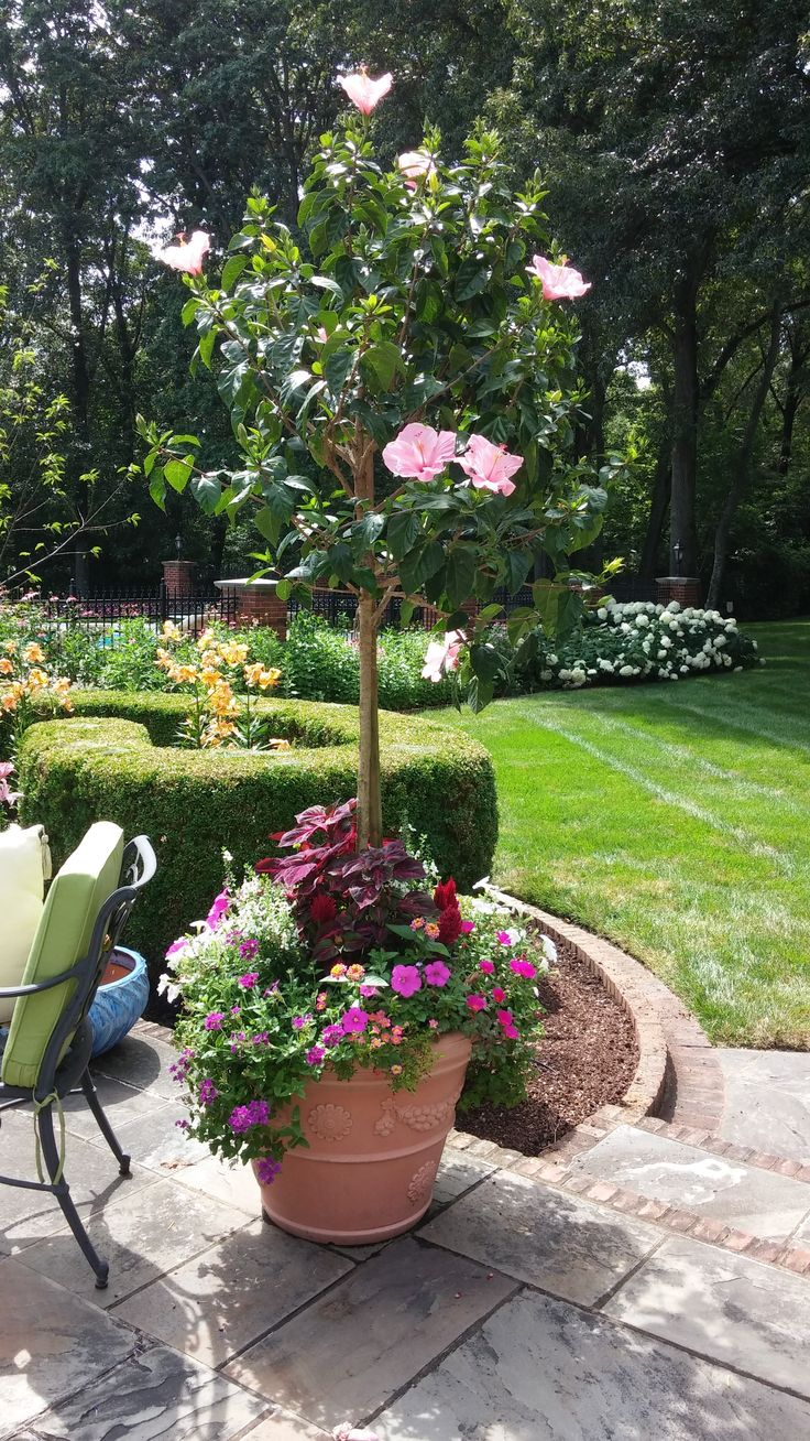 This Container Pot Pairs A Pink Hibiscus Tree With Lantana
