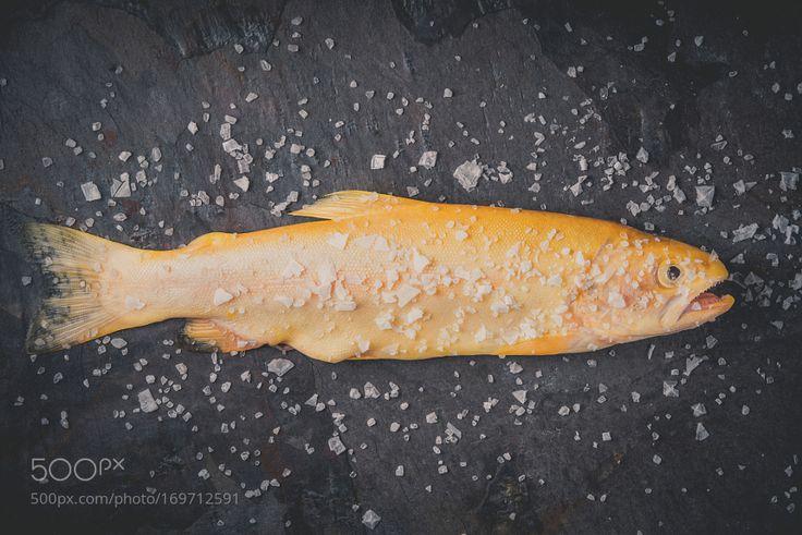 Rainbow trout by Karpenkov