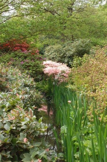 철쭉 영국 리치몬드공원에서