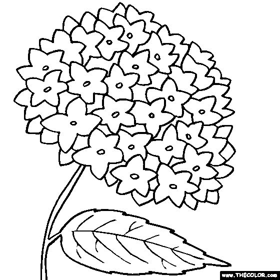 Hydrangea Flower Online Coloring Page templates