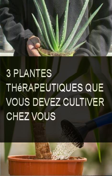 3 plantes th rapeutiques que vous devez cultiver chez vous - Plante aloe vera chambre ...