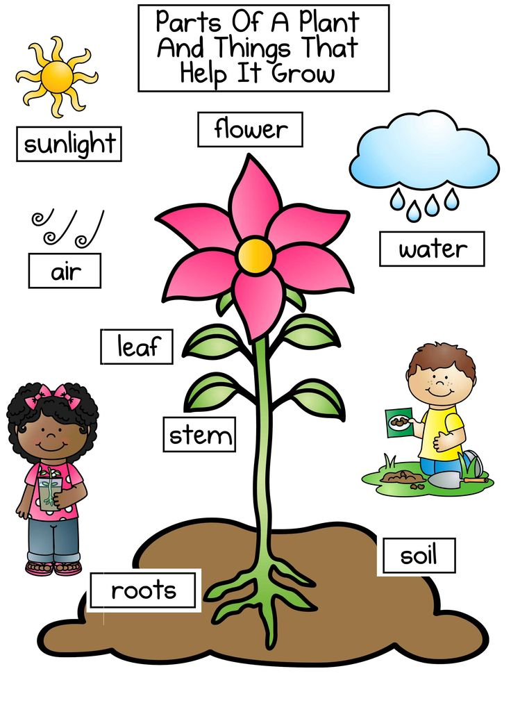 how to grow a bean plant for kids