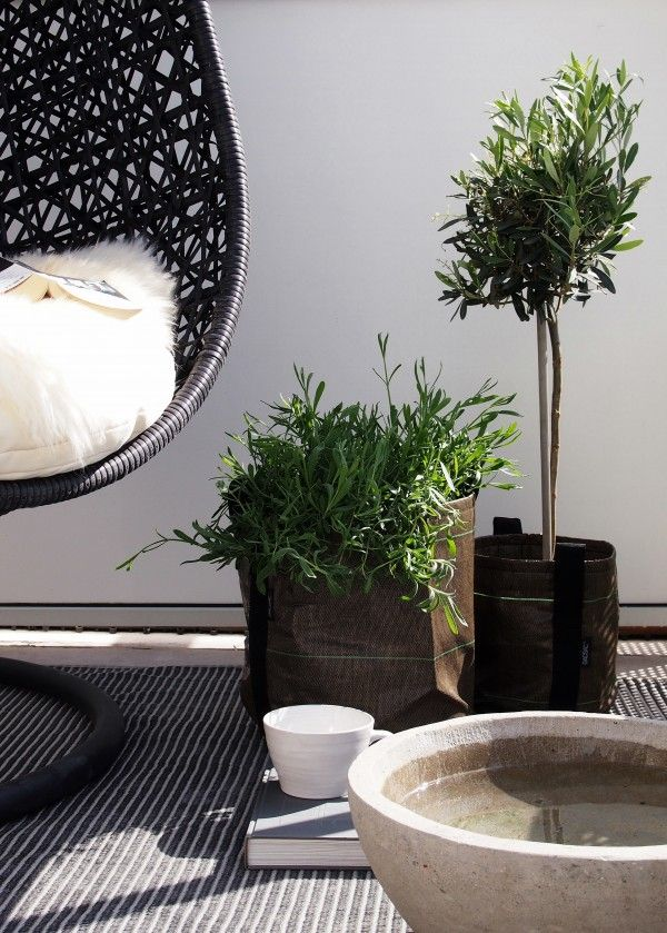 gorgeous black wicker mini olive trees and white - Hitta Hem | Balcony inspiration 2012