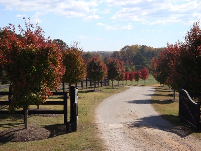 Farm Entrance, I like the use of using the same tree to line the driveway.  Would be neat in bush form for a smaller entrance or lining the small driveway