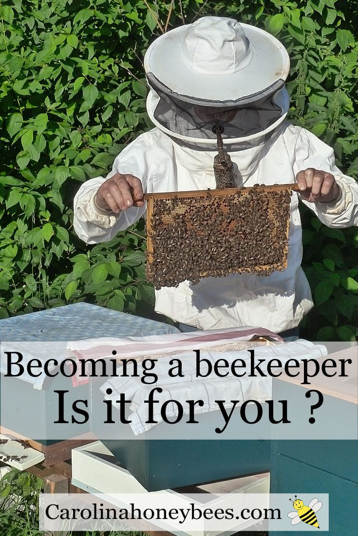 Becoming a beekeeper, how to buy bees, how to get started in beekeeper - learn the first steps on your beekeeping journey Carolina Honeybees Farm