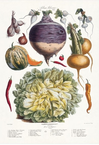 Vilmorin-Andrieux & Cie arose in the 18th century with their first catalogue for seeds for the kitchen garden.