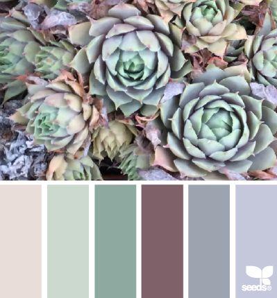 succulent hues: fence to shed colour scheme