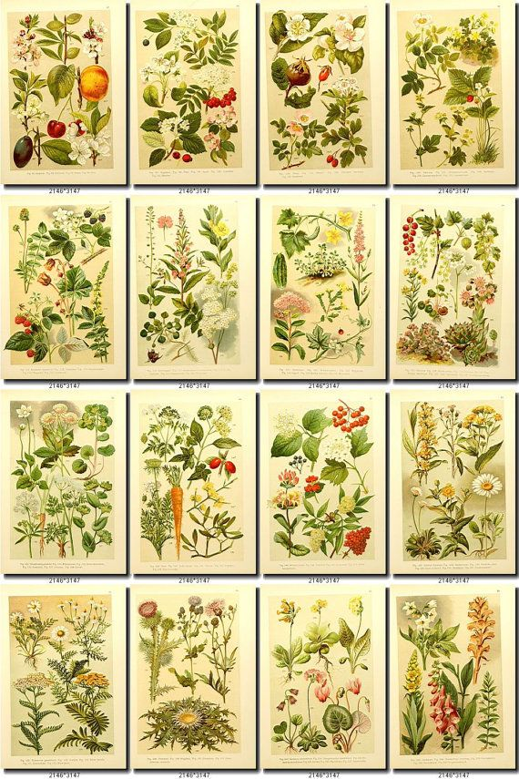 LEAVES GRASS-3 Collection of 219 vintage vegetable ...