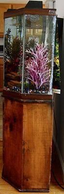 40 Gallons Aquariums