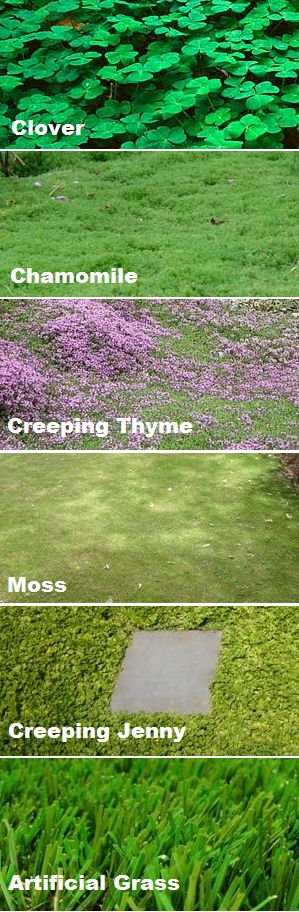Ground cover instead of a grass lawn. Better for bees, environment and water bill.