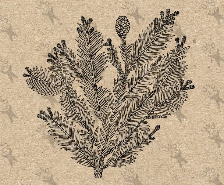 Vintage image Tree Pine Pine cone Instant Download picture Digital printable clipart graphic  Burlap Fabric Transfer Iron On Pillows 300dpi by UnoPrint on Etsy