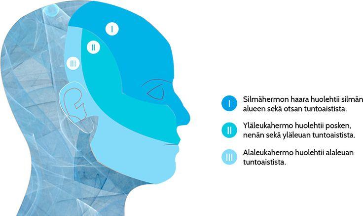 Kolmoishermo (nervus trigeminus) on kasvojen alueen kolmihaarainen tuntohermo. Kukin haara huolehtii tietyn kasvojen alueen tuntoaistista.Hermoja on kaksi, kummallakin puolen kasvoja on omansa. Kolmoishermosärky on yksi kovimmista neuropaattisista kiputiloista.  Kolmoishermosärky voi tuntua minkä haaran alueella hyvänsä, mutta sitä saattaa esiintyä myös kahden tai kolmenkin haaran alueella. Tyypillisesti kolmoishermosärky on toisella puolen kasvoja, mutta myös molemminpuolinen …