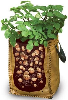 "GROWING POTATOES IS EASY. Simply place 4"" of soil in a re-usable woven shopping bag. Place a store bought potato or two two inches below the soil, water the soil and keep it damp. The potato should sprout and start growing in a couple of weeks. When the plant reaches 8"" start adding soil allowing a few inches of the plant to peek through. RollingPlanter.com on Pinterest: www.pinterest.com/rollingplanter"