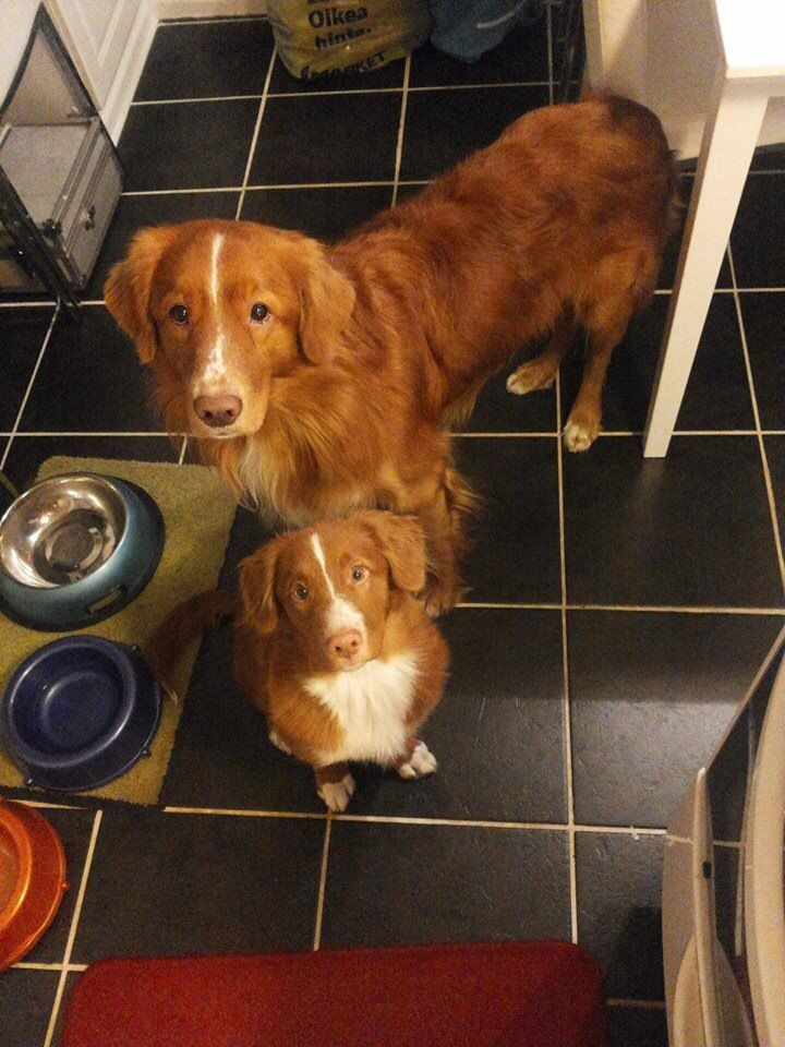 Toller any second you spend in the kitchen.