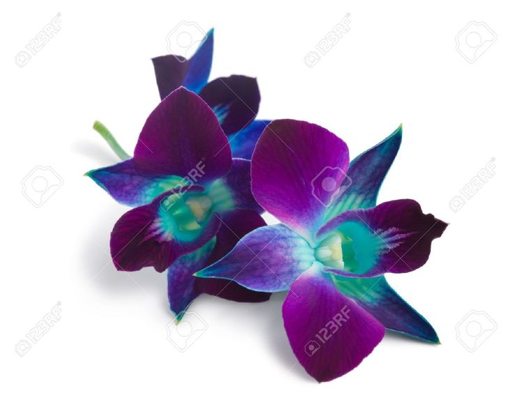 blue and purple orchid - Google Search