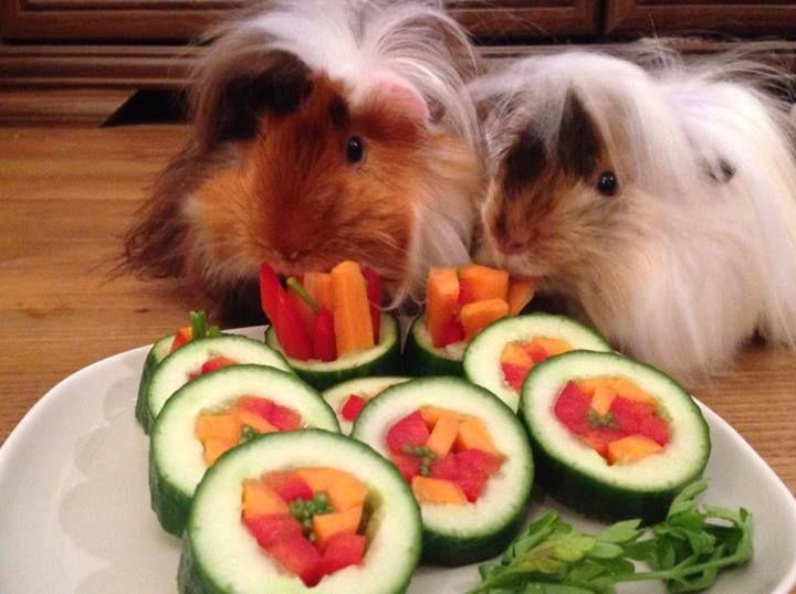 Guinea pig sushi!