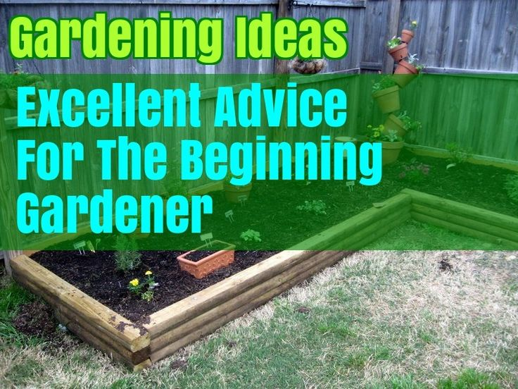 Grow Organic Produce For Your Family With These Tips – Home Gardening