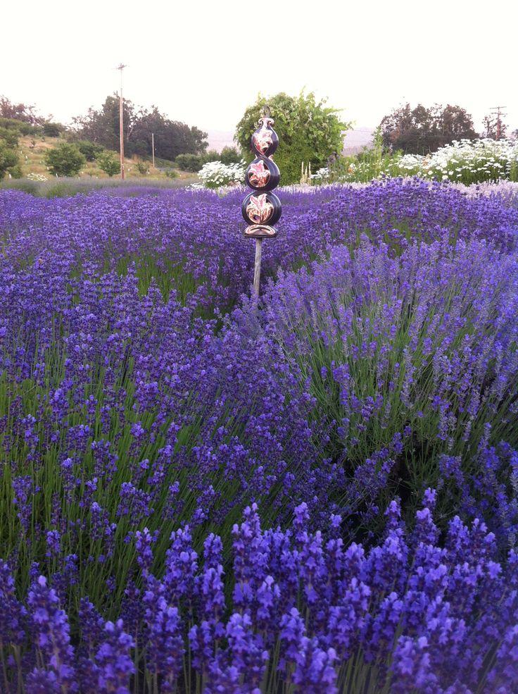 61 Best My Dream Flower Garden Images On Pinterest