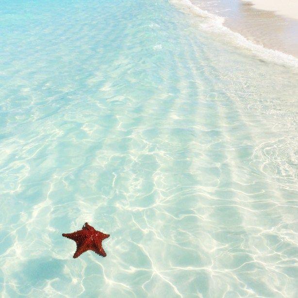 Starfish | Perfect Beach Photo | Traveling to The Exumas, Bahamas | Guide to Exumas, Bahamas | elanaloo.com