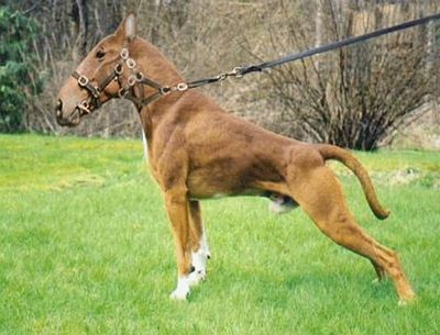 Horse Dog. | :: PHOTOSHOP FUN :: | Pinterest | Pictures of ...