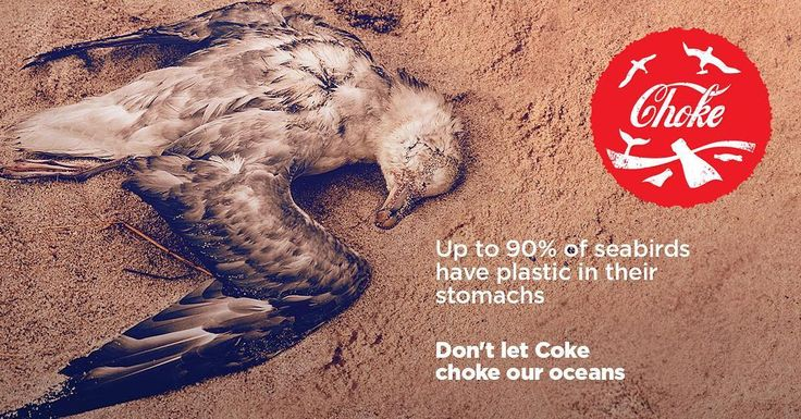 LAST CHANCE TO SHARE AND WIN: Help us call out Coke for their plastic pollution (petition in the bio). Share this post for your chance to win a #greenpeace keepcup! #shareacoke  #endoceanplastics #noplastic #plastic #plasticfree #plasticpollution #plastickills #breakfreefromplastic #notoplastic #ocean #marinelife #coke #cocacola