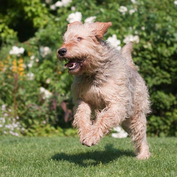 615 Best Doggydog Images On Pinterest
