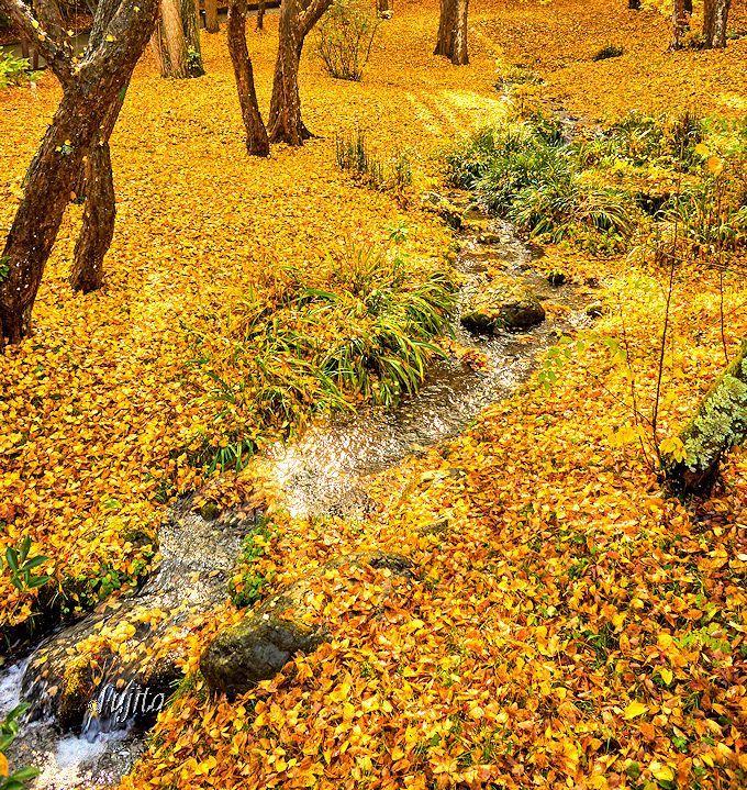 千葉県で一番早く一番遅い紅葉?成田山公園は晩秋も紅葉見頃! | 千葉県 | Travel.jp[たびねす]