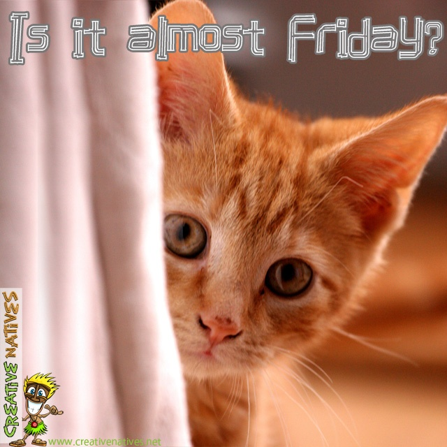 Is it almost Friday?