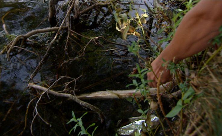 Kilkaset śniętych węgorzy w jeziorach Łubowo i Morawy