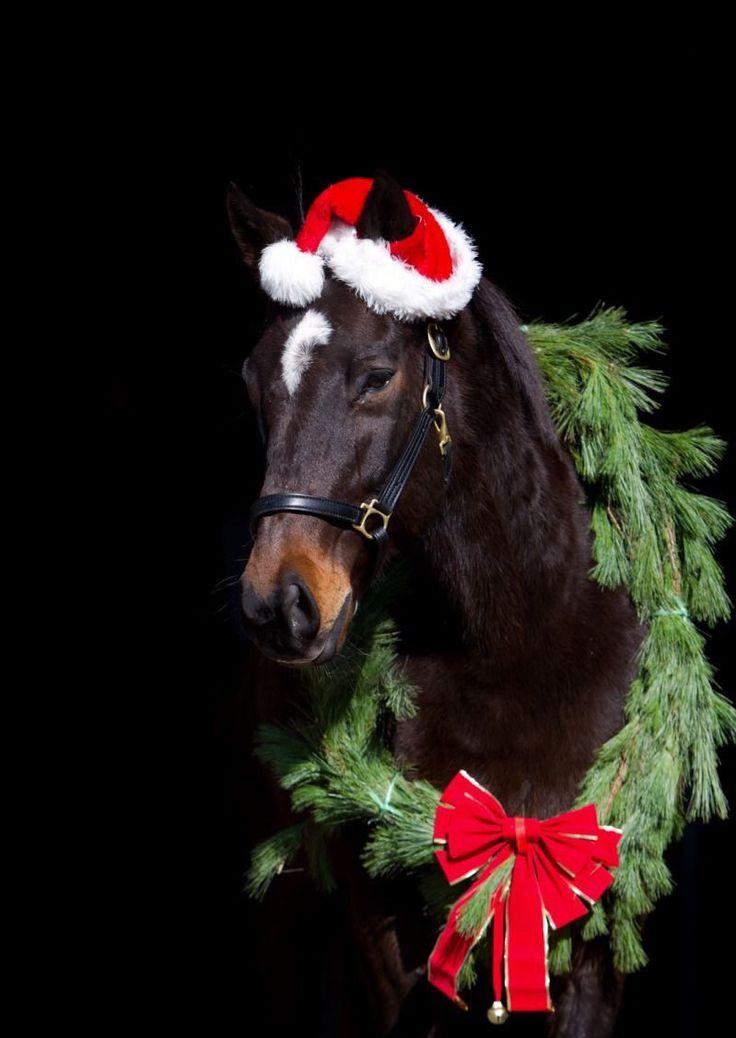 Школьная открытки, картинки лошади к новому году прикольные