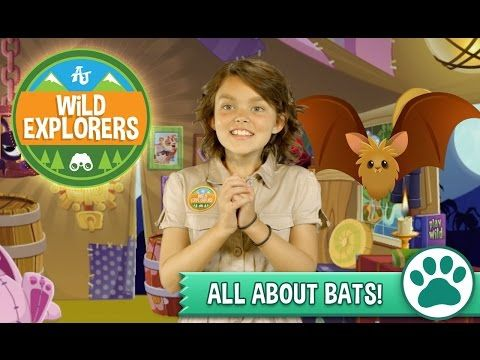Wild Explorers - All About Bats - YouTube. In this wild episode, we team up with Bat Conservation International to show just how cool bats really are!