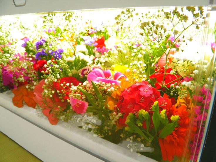 Lato w pełni, także w Green Farm! #GreenFarm #Hydroponika #Hydroponics #Kwiaty #Flowers
