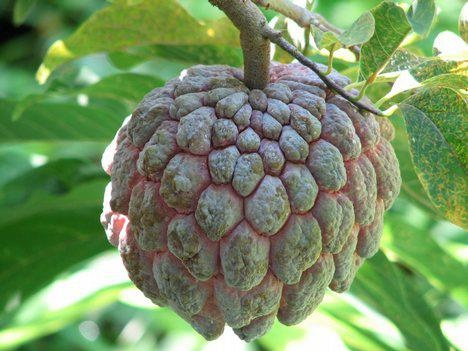 Sweetsop- This is a fairly unknown cancer fighting fruit