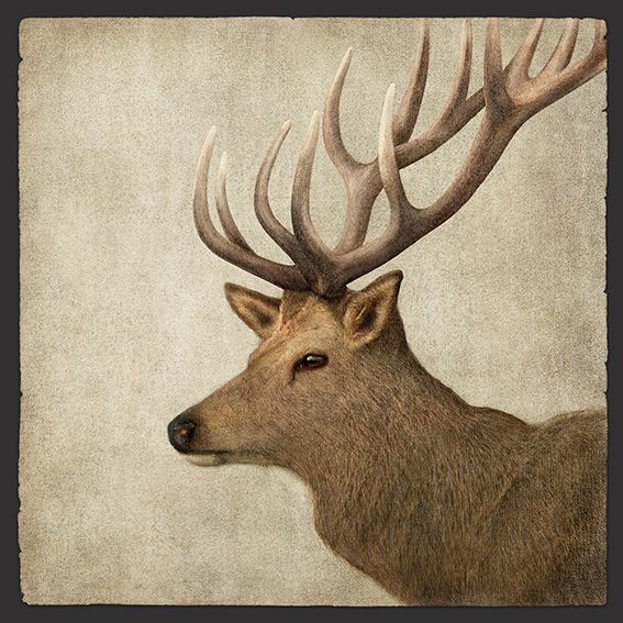 Imperial (the name given to stags with 14 points on their antlers) - by RAW + design, a NZ design studio who focus on photographic and illustrative designs. Available as canvas and paper artprints from www.imagevault.co.nz