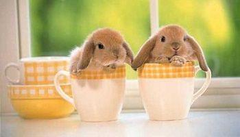 No false sales of so-called extra-dwarf rabbits! Animaux - Signez la pétition : Non aux ventes mensongères de lapins dits extra-nains !
