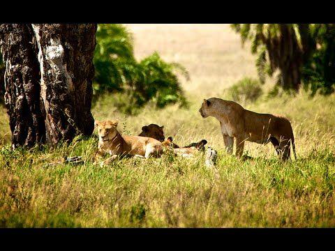 Safari i Tanzania & badeferie i Zanzibar - Book din ferie her