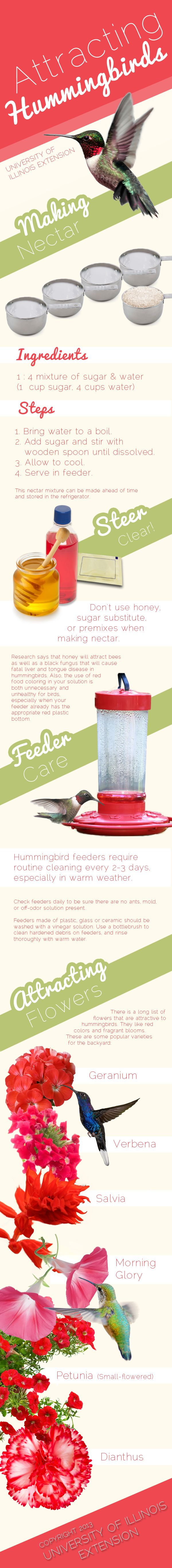 Recipe to make your own hummingbird nectar.