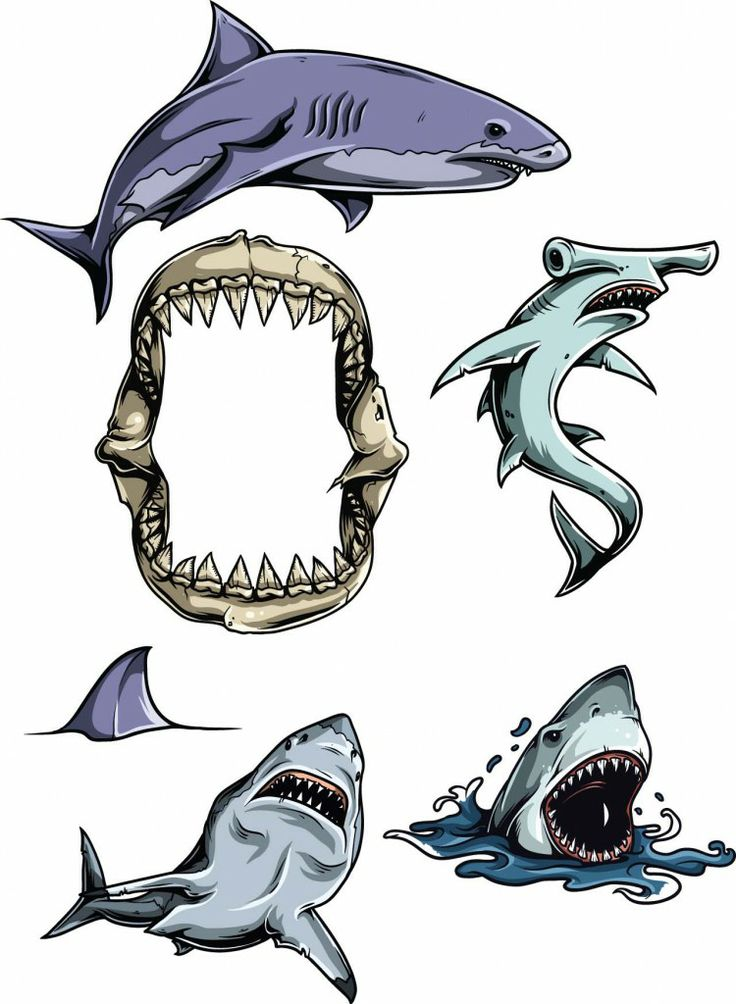 Sharks Vector Clipart Set FREE VectorsCards And
