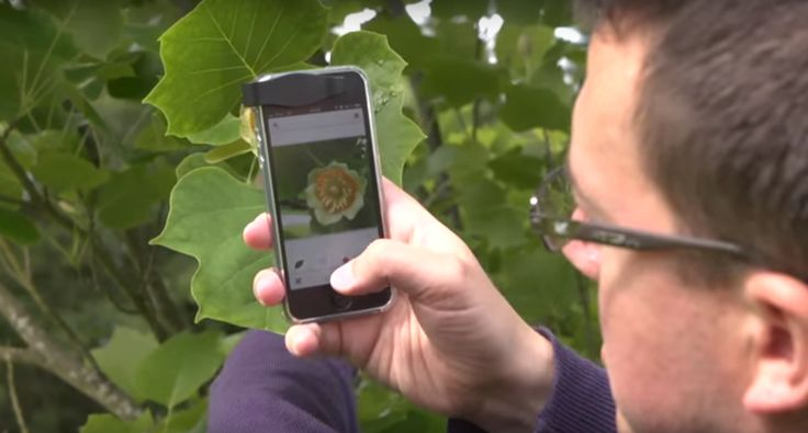 The+'Shazam'+For+Plants+Will+Identify+Any+Plant+From+A+Picture