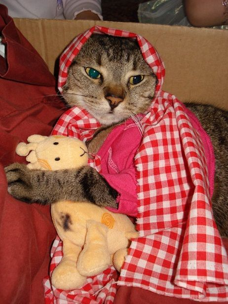 Cat Wearing Red Scarf :)