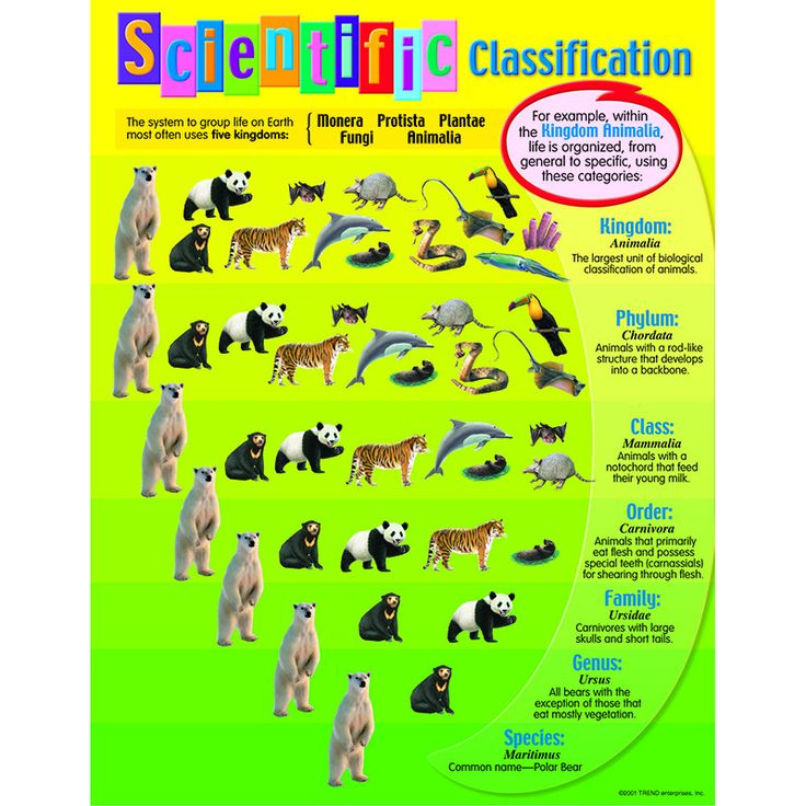 7 Best Classification Of Living Things Images On Pinterest Carl