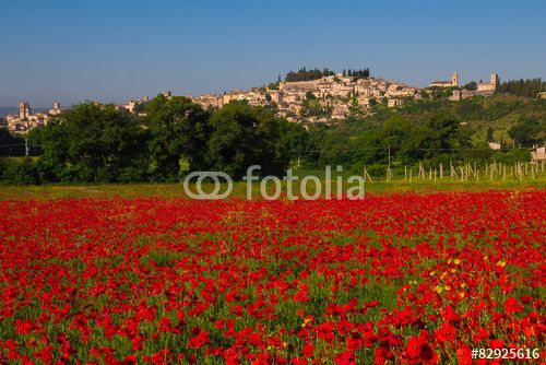 Panoramic view of Spello with red poppies. #Spello #Umbria #City #Italy #Travel #Holidays #Tourism #Poppies #Flowers #Poppy #Nature #Landscape