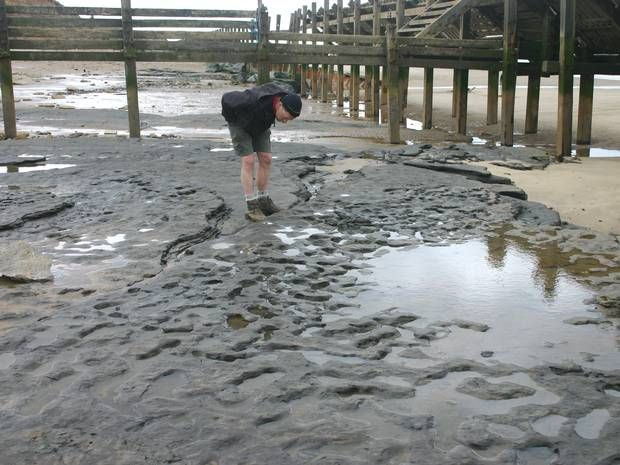 Million-year-old Norfolk footprints: Just who were 'Homo antecessor' and how did they arrive in Britain? - News - Archaeology - The Independ...