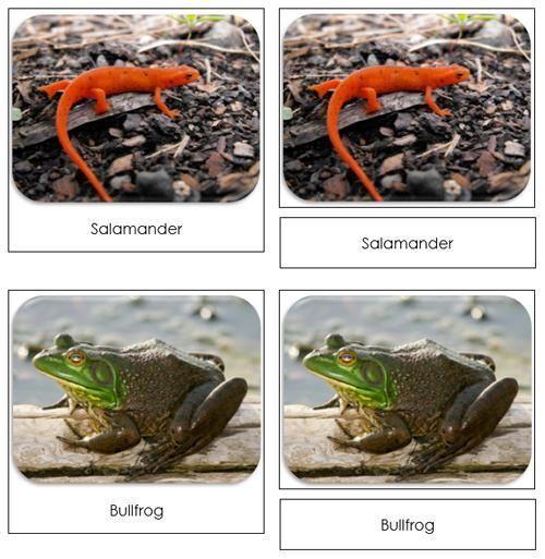 River Safari Toob Cards - Printable cards by Montessori Print Shop