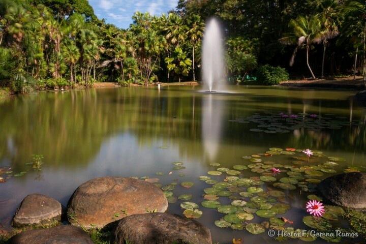 501 best images about puerto rico on pinterest for Jardin xanadu puerto rico