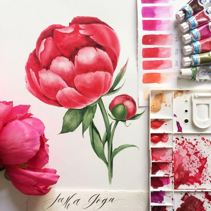 – Sasha Goga (@gogaillustrator) в Instagram: «Мой пион для первого тура #ботанический_баттл  Я в команде @juliabarminova…»  #drawing #peony #pink #watercolor #botanical #illustration